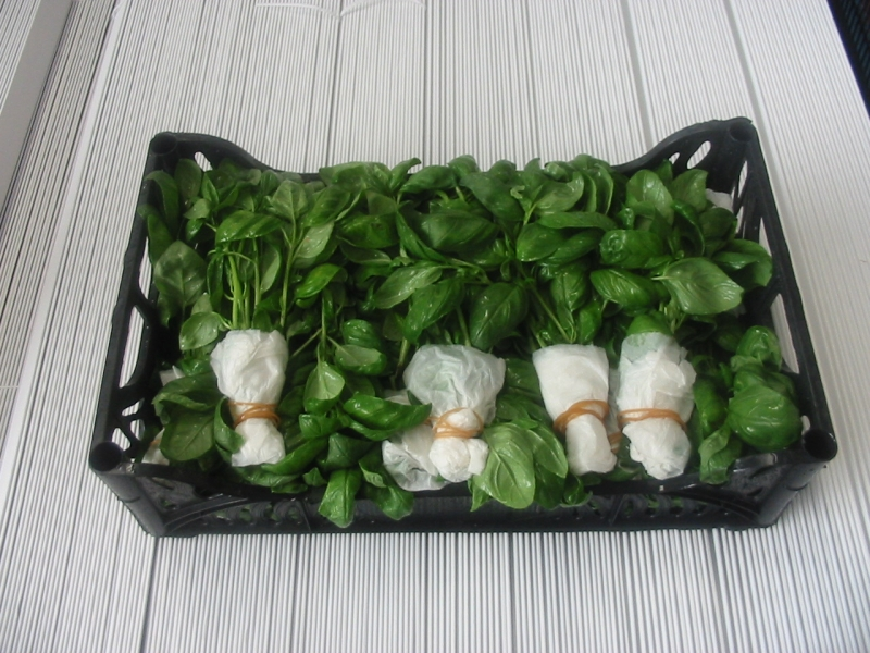 Basilico confezione
