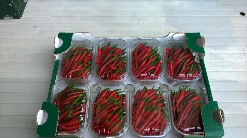 Rawit red 1